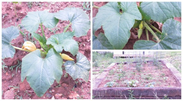 garden update 3 (3a)
