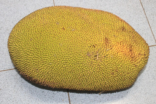 jackfruit is not durian