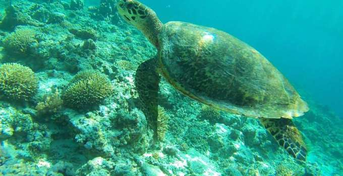 Turtle visible while snorkeling