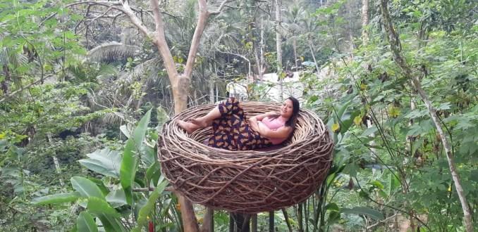 Bird Nest Bali Uma Pakel