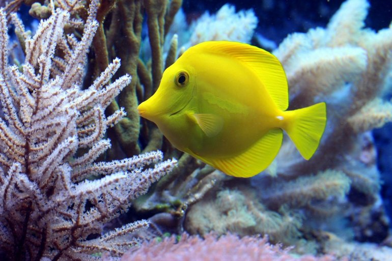 colorful fish during with corals