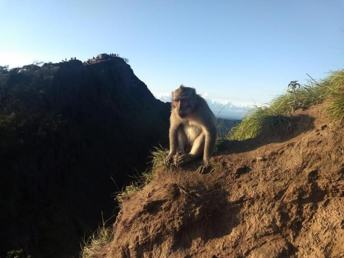 Monkey greeting hikers of Mount Batur Sunrise trek