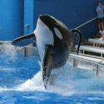 Sea world whale