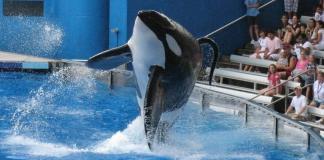 Sea world whale