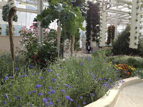 the-land-flower-garden
