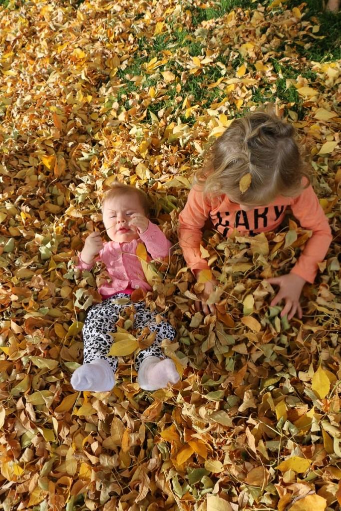 fall-leaves-utah-2016-21