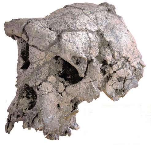 Sahelanthropus tchadensis, 6,5 millones de años