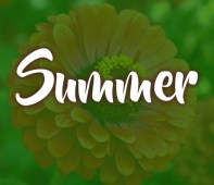 summer-gardening-flowers-trees-tallahassee