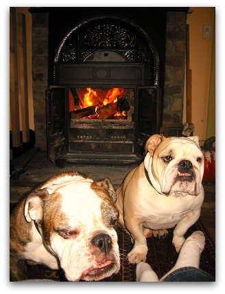Boz and Gracie, happy dogs by the fire