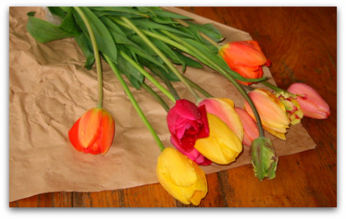 fresh cut tulips from Washington State