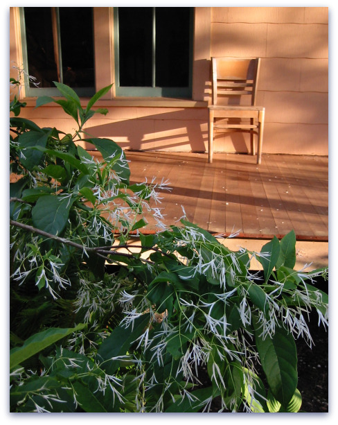 Evening Sun on Porch Vashon Island