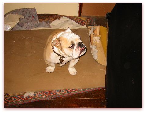 Boz misses his sofa