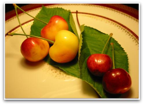 giant size Rainier Cherry and small homegrown Rainier Cherry