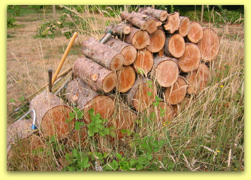 woodstack of fir rounds