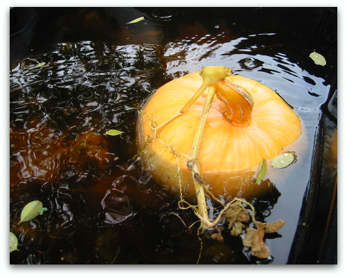 2009_10_06_blog_pumpkin