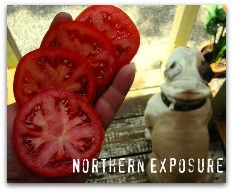 blog_northern_exposure_sliced