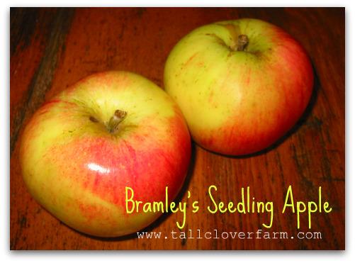Bramley's Seedling Apple