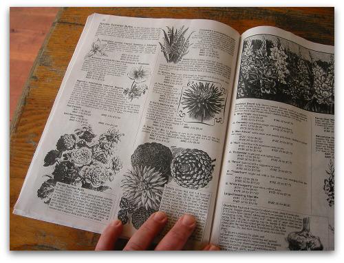 fedco seed catalog