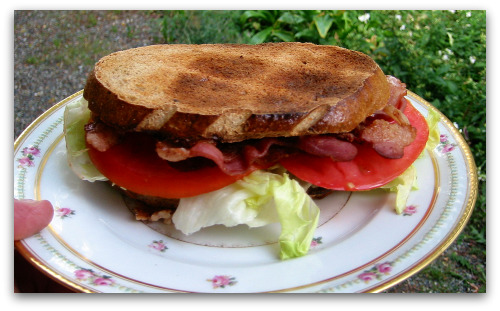 homegrown tomatoes on a big BLT sandwich