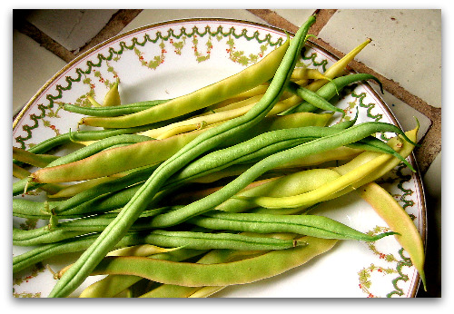 fresh fortex green beans and gold of bacau beans