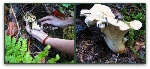 mushroom hunting in the woods