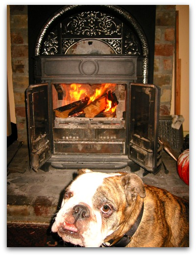 Gracie warms up by the fire