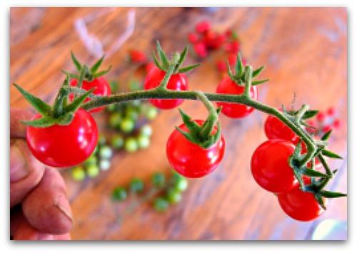 stem of cherry tomatoes