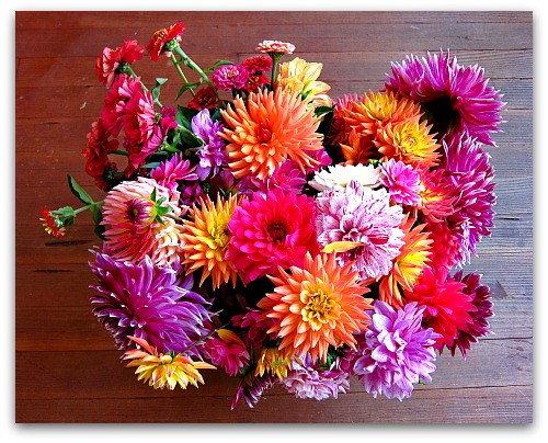 colorful bouquet of summer dahlias