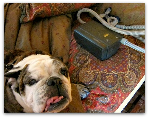 dog and cpap
