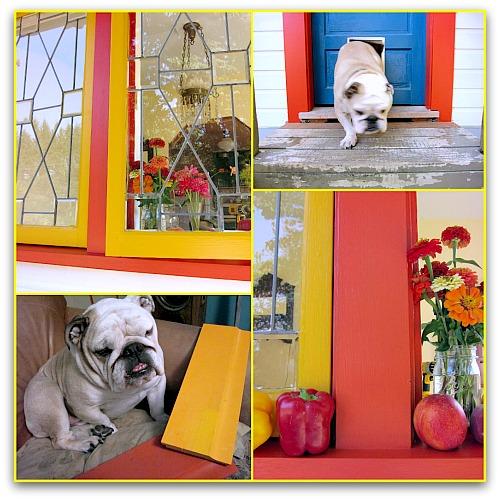 bulldog and bright paint