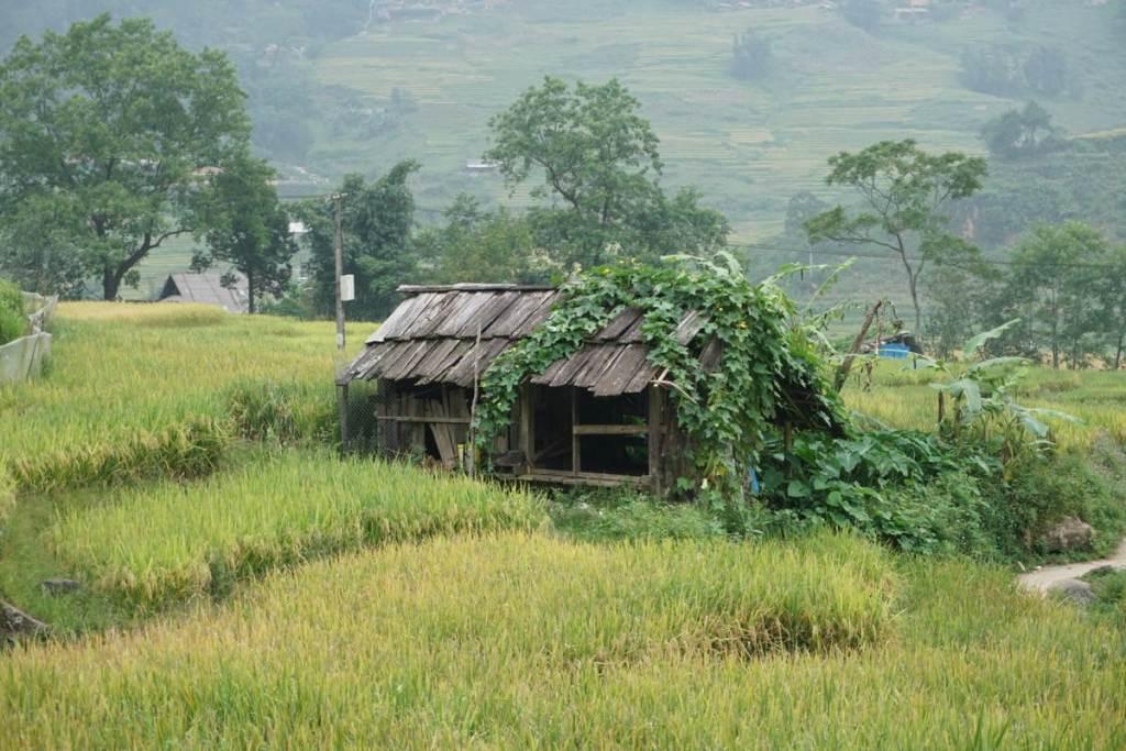 בית בשדות ויאטנם