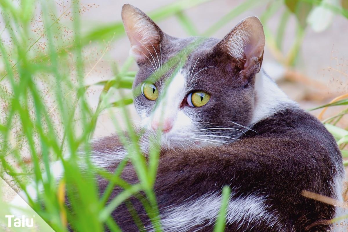 50 Ungiftige Pflanzen Für Katzen Katzenfreundliche