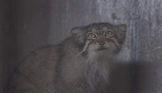 お盆な東山動物園の動物たち