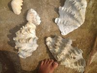Seashell arrangements by a Cambodian girl