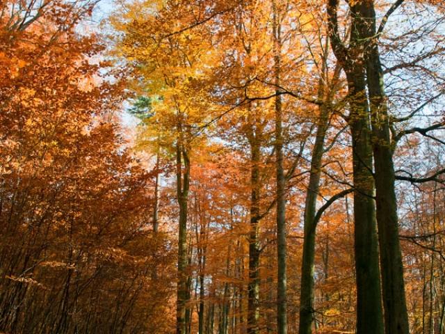 Park Sonsbeek herfst Arnhem Gelderland