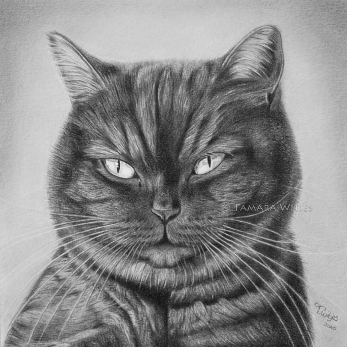 potloodtekening kat