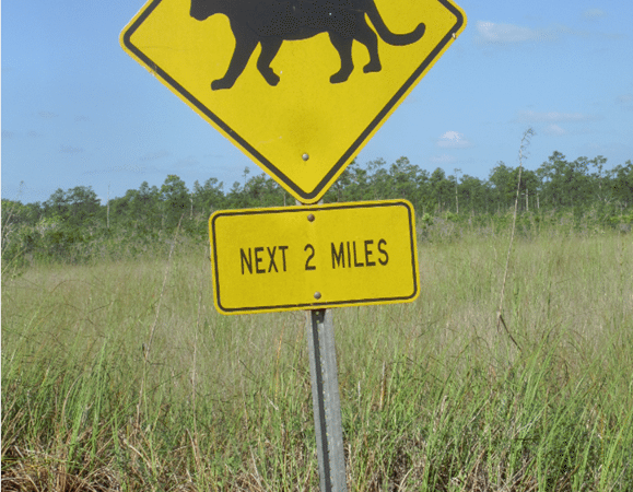 Animals along the Anhinga Trail at the Everglades National Park