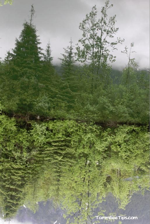 Golden-Princess-Juneau-Mendenhall-Glacier-Pond.png
