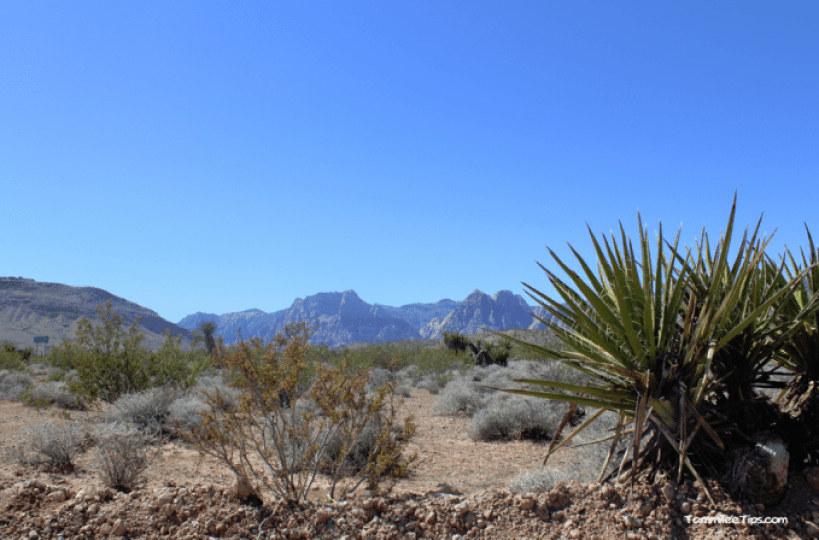 Red-Rock-Canyon-Cactus.png