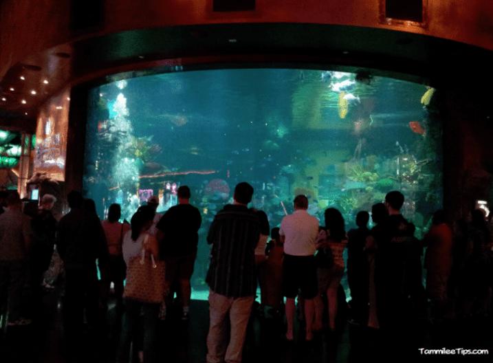 Tanked-Aquarium-Silverton-Casino.png