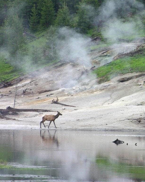 Elk-by-lake.jpg