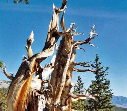 Great Basin National Park offers more than meets the eye!