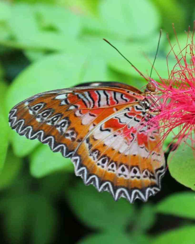 orange and white butterfly