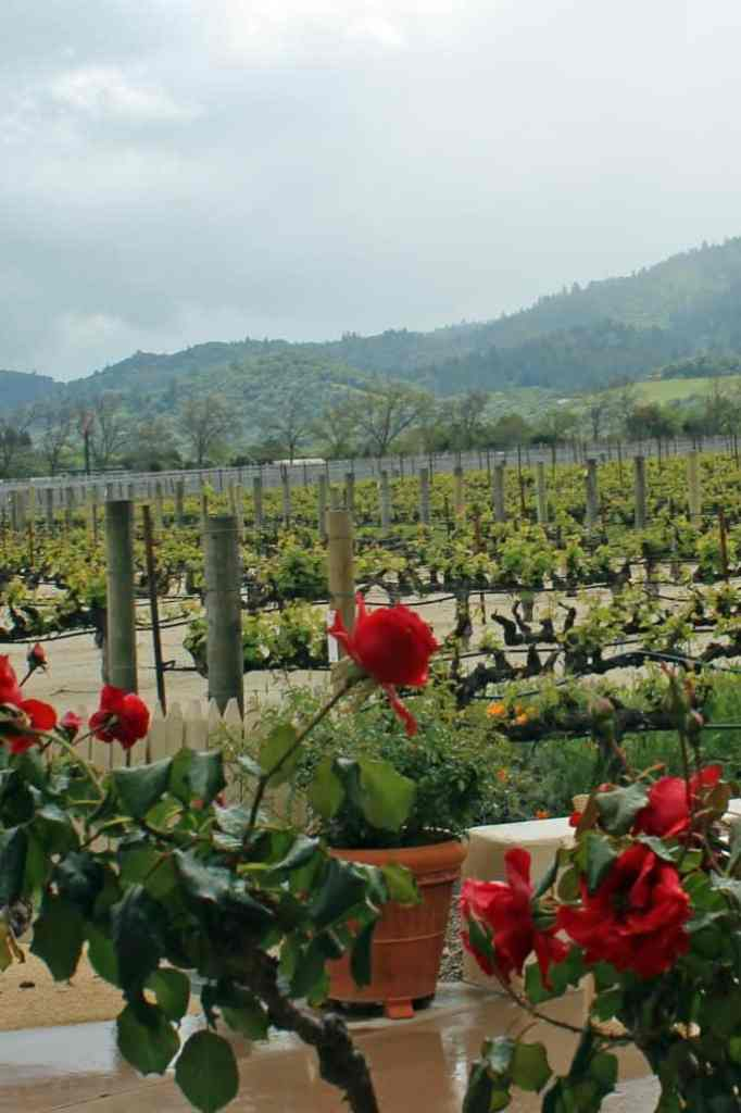 grapes and roses at Robert Mondavi