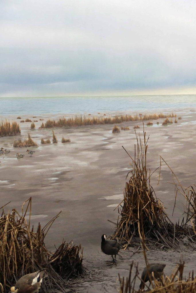 Blog marsh area at Royal BC Museum Victoria BC