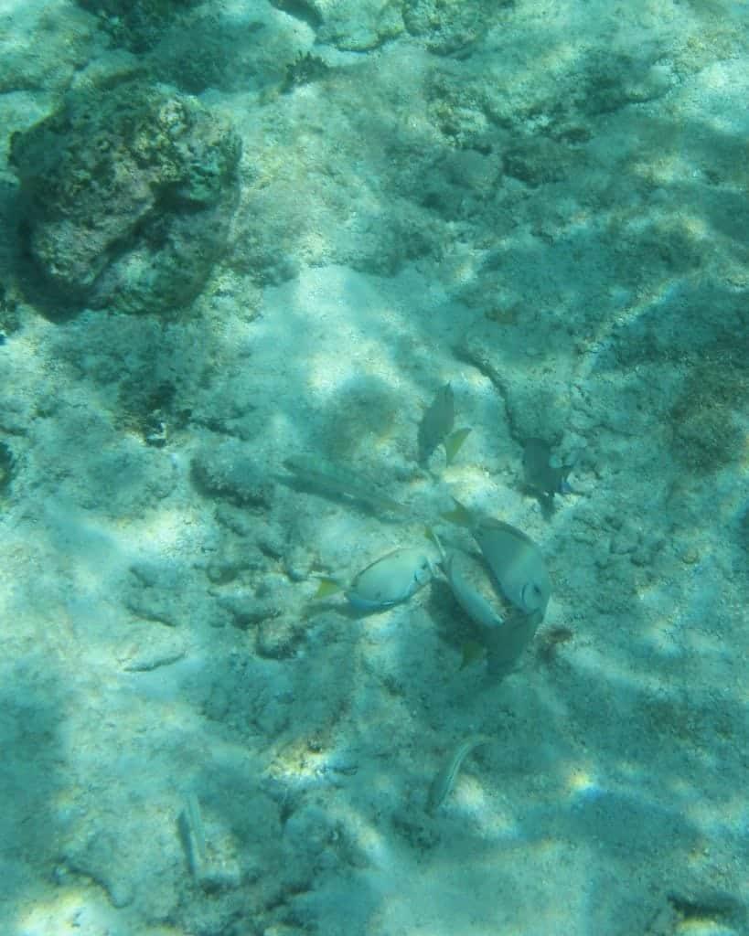 beautiful fish in Belize