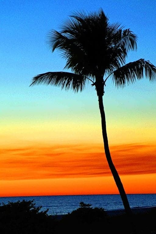 Blog-Palm-tree-at-sunset.jpg