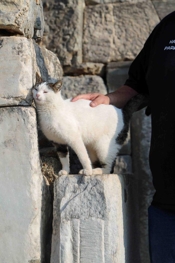 Blog Kusadasi cat that loved John