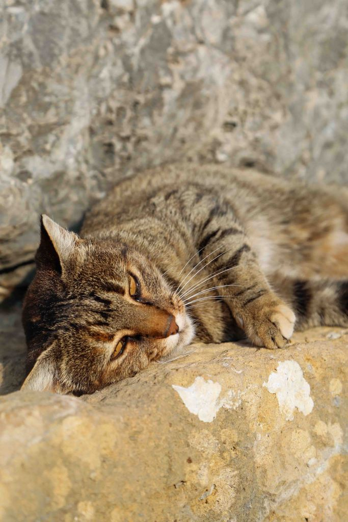 Cats of Greece and the Mediterranean