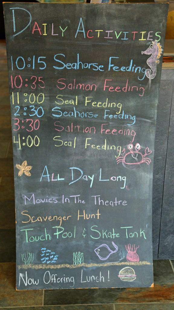Daily activities at the Fundy Aquarium